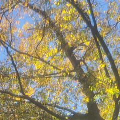 紅葉/光/朝/風/秋 🔸🍂秋風にきらめく木の葉🍃🔸(2枚目)