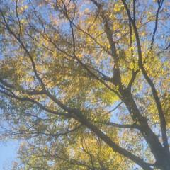紅葉/光/朝/風/秋 🔸🍂秋風にきらめく木の葉🍃🔸(3枚目)