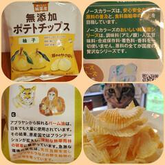 国産/のり塩/柚/こめ油/無添加/お菓子/... ポテトチップス🍋 (無添加 国産 こめ油…