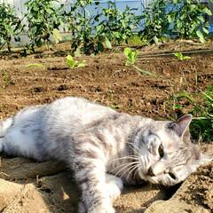 家庭菜園/畑/野菜/まーちゃん/ねこ 🌱まーちゃんと畑② ちょっと汚れるよ、ま…