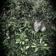自然/花/草/ヒグチユウコ/ねこ/まーちゃん 先ほどの写真のフィルター加工遊びです。 …