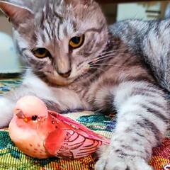 鳥/ねこ/まーちゃん 🐅まーちゃん、野生の血が騒ぐ🦁 かわいい…