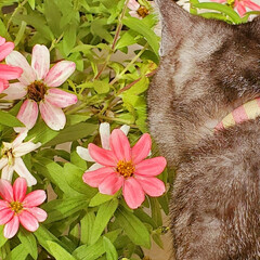 植物/花/ねこ/まーちゃん まーちゃんと植物🍃(1枚目)