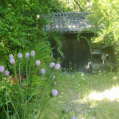 春/竹/ハルジオン/新緑/草/門/...  今年の春の風景 今年も描こうとして、下…