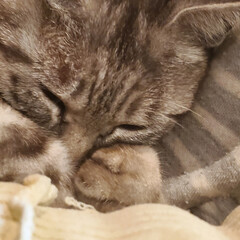 寝る/夢/ねこ/まーちゃん/秋 🔅まーちゃんの見る夢🎠🌛 🐰🔅💗眠りねこ…(5枚目)