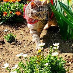 まーちゃん/ねこ/花 🌸とまーちゃんを集めました。…💧