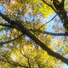 紅葉/光/朝/風/秋 🔸🍂秋風にきらめく木の葉🍃🔸(4枚目)