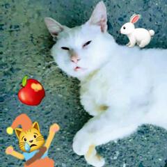 白雪姫/ねこ/白猫 しろねこ(♂️)(2枚目)