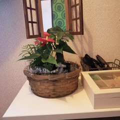 玄関インテリア/観葉植物/セリア/風水/100均 玄関の気が良ければ…大体🆗と📺風水で言っ…(1枚目)