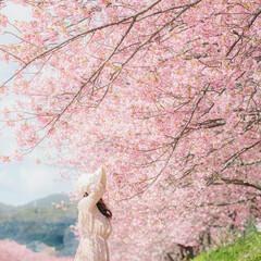 桜/ピンク 春色 #ピンク