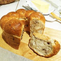 ちぎりパン/和くるみ/ライ麦/食欲の秋 成形時に8等分して、シフォンケーキ型に入…