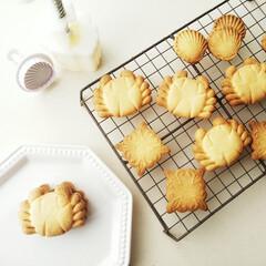 カニ/貝/クッキー 可愛い型押しクッキー。 本来なら蟹の型は…
