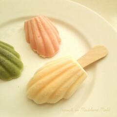 シリコン型/マドレーヌ/アイスバー 手作りアイスを小さなマドレーヌのシェル型…