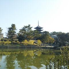 旅/奈良/お寺 奥に見えるのは、奈良旅行に行った際に泊ま…