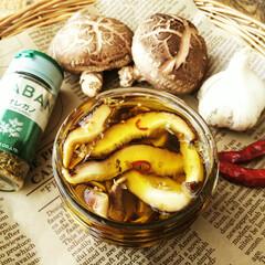 椎茸/オレガノ/オリーブオイル オレガノで香りをつけた、椎茸のオリーブオ…