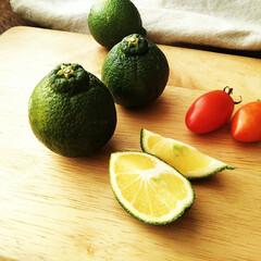 デコポン/ミニトマト/アイコトマト デコポンの早生。 ミニトマトと比べてもこ…