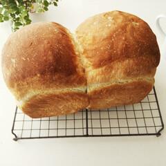 食パン/焼きたて/ミルク いつもよりちょっと大きめにふくらんだ、や…