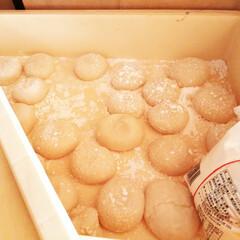 餅つき/餅/正月 この時期、夫の両親と孫たちが正月用のお餅…