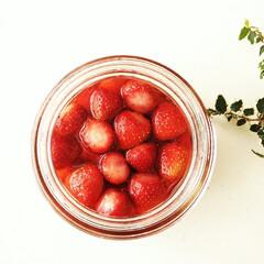 いちご/砂糖漬け/シロップ いちごの砂糖漬け。 真っ赤なシロップはヨ…