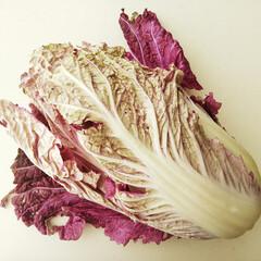 """冬/白菜/紫 内側の葉が紫色の、""""紫白菜""""を初めて使っ…"""