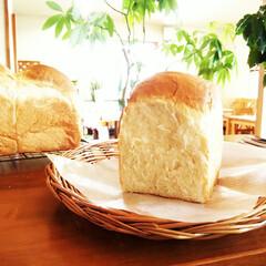 食パン/トースト/食感 ひとつ前に載せたパン。 グルテン量が違う…