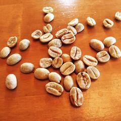 コーヒー豆/生豆/コーヒー 一般的にはコーヒーの実から出したばかりの…