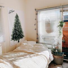 ベッドルーム/ベッド/レイアウト/マイルーム/自室/タペストリー/... 今年のクリスマスは、タペストリーで飾って…