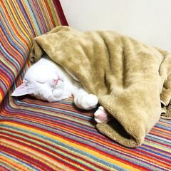 ねこ ソファーの端っこで、眠ってたうちの王子様…