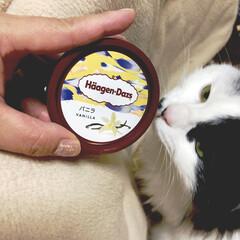 猫好き/保護猫 うちのお嬢様うーしー🐱 冷凍庫を開けて手…(1枚目)
