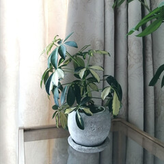 植物のある生活/植物のある暮らし/鉢カバー/コンクリート/観葉植物/雑貨/... .。*♡コンクリート 鉢カバー♡*。. …