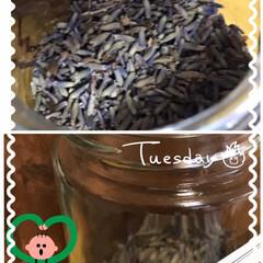 乾燥lavenderとハッカオイル lavender、生花のうちに頂いたもの…