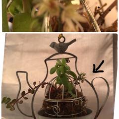 多肉植物のある暮らし なんか地味な花が咲きました❣️ 苔と土の…(1枚目)