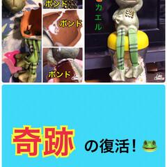 手芸ポンドの神業/割れたカエル🐸復活 昨日、梅雨コーナーに飾っていた脚ブラ人形…(1枚目)