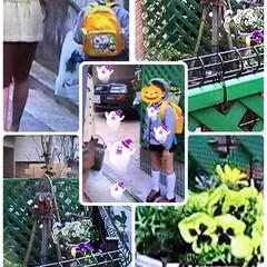 20年前のグリーン色ガーデンラティス 家を建てたばかりの20年前のDVD📀を観…