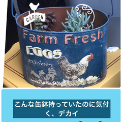 多肉植物のある暮らし/缶鉢 1階の防災倉庫には忘れてた宝があるんだ❣…(1枚目)