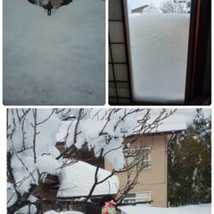 上越の雪 今日の雪はどんな❄️か確認、長い庭を踏み…