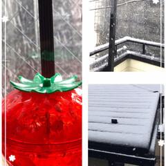雪 昨日はコロナウイルス🦠収束(終息)を願っ…