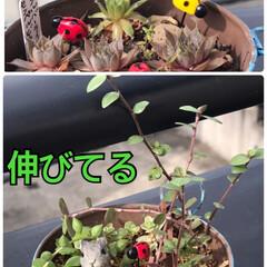 多肉植物のある暮らし おはようございます😃 多肉植物に水あげて…(1枚目)