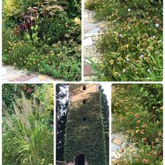 ロックハート城/グリーンな庭 やはりグリーンは良いですね❣️ こんな庭…