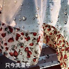 いちご🍓のcafeカーテン 2階のトイレのcafeカーテンも苺🍓だっ…(1枚目)