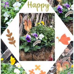 寄せ植え 日曜日に植えた寄せ植え綺麗に根付きました…