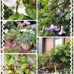 我が家の小Garden 今朝の我が家のツルの植物絡まって絡まって…