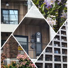 気になるマンション外壁 最近建ったマンション外壁が板のようなデザ…(1枚目)