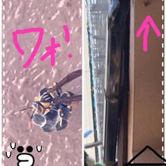 命を守るステイホーム🏠週間/蜂の巣造り始まる 昨日物干しで飛んできた足長蜂🐝まさか巣を…