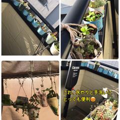 植物のある暮らし 朝から暑い😵 植物達に安らぎをもらお…(1枚目)