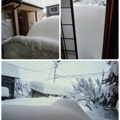 上越の平地の雪 大変大変、上越の平地に建っている姉宅と棟…