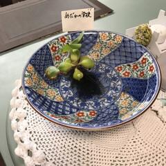 メダカさん 旅先で300円で水草とメダカ12匹買った…(2枚目)