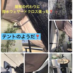 屋根代わり屋根代わり/多肉植物のある暮らし/ダイソー 昨日リメイクした雨よけ棚に続き、夜に雨よ…(1枚目)