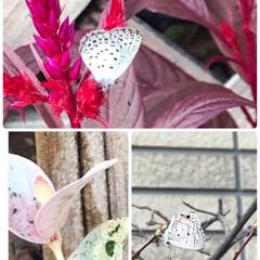 何度も蝶に会う 買い物帰り道、家に近くなると蝶に目が行き…