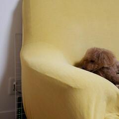 ルーター収納/Wi-Fiルーター/必需品ルーター/ルーターの隠し方/ルーター置き場 ルーターはソファーの後ろに隠してます。 …(1枚目)